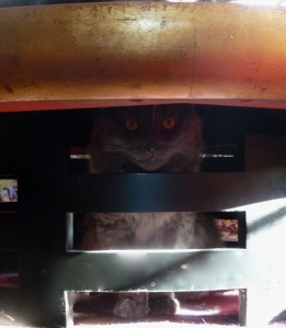 Bodhi prefers to watch the world from underneath the coffee table.