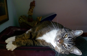 Ben in the suitcase/cat bed looking so sweet