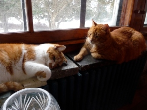 Noah and Fred at rest on the warm radiator