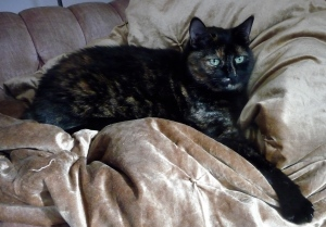Eleanor perched on top of our new blanket (she thinks that she owns the place...and she is right)