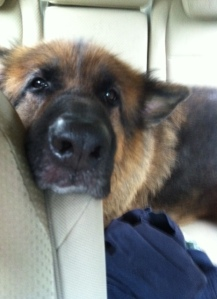 Luke in the back seat of my car