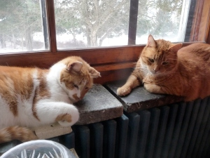 Noah and Fred on the radiator