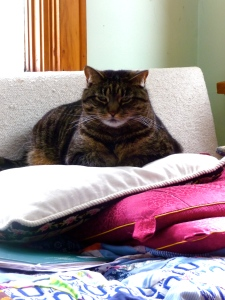 Esther on her pillows (which made me think of the song,   so the link to it is below)