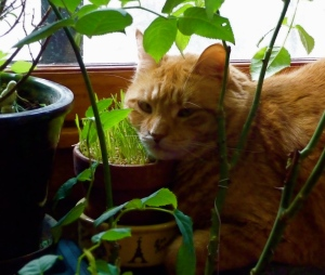 Fred on the radiator (with his head resting on the pot of wheat grass)