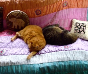 Fred and Esther napping together...a first