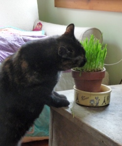 Eleanor enjoying the wheatgrass
