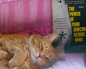 Fred plopped himself down next to a book on the couch (I really didn't stage this!) and it looks like the little star is coming right out of his head!