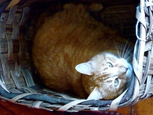 Jack brought home this basket to put Luke's toys in, but Fred had another idea for its use