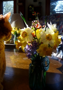 Fred admiring the bouquet I picked yesterday