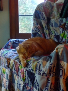 Fred on a chair this morning