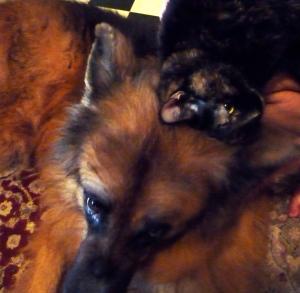 Eleanor resting on top of Luke's head
