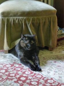 Eleanor under the kitchen chair