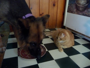 Fred patiently waiting to lick Luke's dish