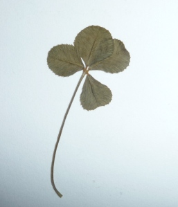 one of four-leaf clovers that I found last year