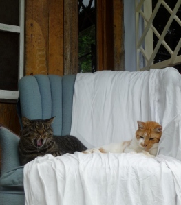 Esther and Noah on the front porch chair...getting ready for their morning naps