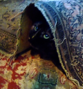 Another cute picture of Eleanor under the rug