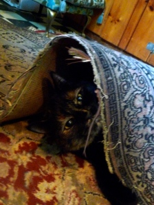 Eleanor playing under one of the old throw rugs in the kitchen