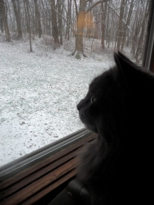 Bodhi looking outside at the snow this morning