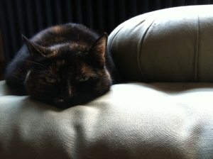 Eleanor on the meditation cushions. If you could give this picture a caption, what would it be?