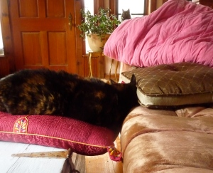 """Eleanor saying, """"I am comfortable here...whether you think it is a safe spot for me or not!"""""""