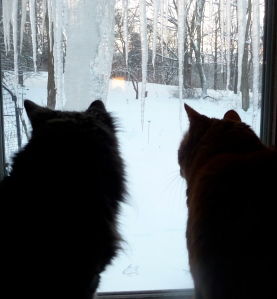 Bodhi and Fred this morning...happy to be inside watching the birds