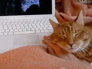 Fred decided to take a nap on my hand this morning as I wrote this post.