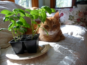 I put the basil next to Fred to make this photograph cuter