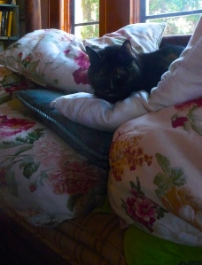 The Princess and The Pea (Eleanor napping on top of a bunch of pillows that I left on the couch)