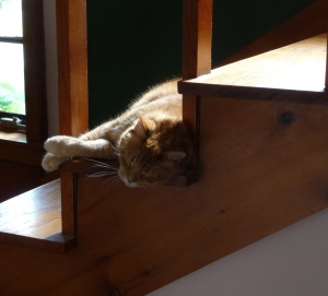 Fred napping on the stairs